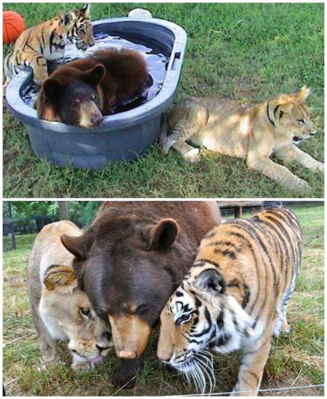 15 ภาพน่ารัก ของสัตว์หลากสายพันธุ์ ที่เติบโตมาด้วยกัน